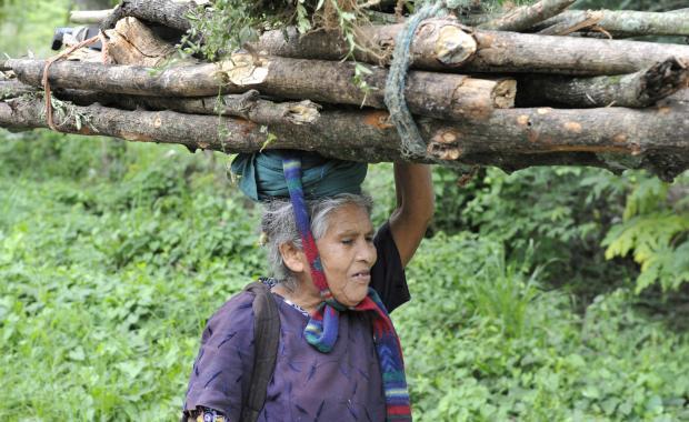 El uso de la mitad de la leña para cocinar equivale a la mitad de la degradación de los bosques.